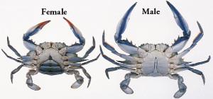femalenmale